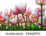 Floral Background. On A White...