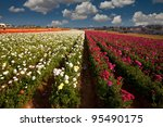 Carlsbad California Flower...