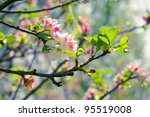 Spring Blossom  Branch Of A...