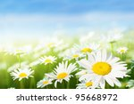 field of daisy flowers | Shutterstock . vector #95668972