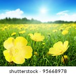 Field Of Spring Flowers And...
