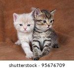 Stock photo pair of beautiful kittens 95676709