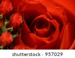 Small photo of Floral background- Roses ( with room for text )