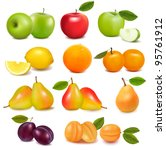 big group of different fresh...   Shutterstock .eps vector #95761912