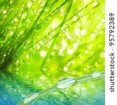 fresh morning dew on a spring... | Shutterstock . vector #95792389