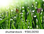 fresh morning dew and butterfly | Shutterstock . vector #95813050