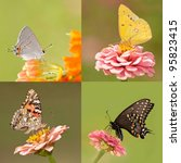 Collage Of Four Butterflies...