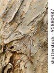 Melaleuca Wood Texture