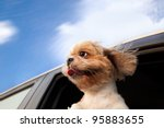 Stock photo dog in a car window and enjoy road trip 95883655