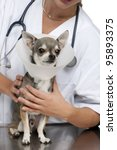 vet holding a chihuahua wearing ... | Shutterstock . vector #95893375