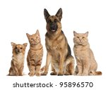 Stock photo group of dogs and cats sitting in front of white background 95896570