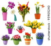flower collection isolated on... | Shutterstock . vector #95905240