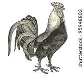 Dorking Cock  Vintage Engraved...