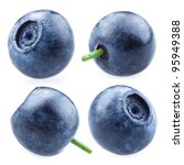 blueberry. collection of... | Shutterstock . vector #95949388