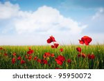 Barley crop with poppies - stock photo