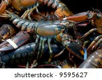 Live Lobsters Caught In Bar...