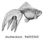 goldfish  veiltail    vintage... | Shutterstock .eps vector #96055565