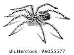 Barn Funnel Weaver Spider Or...
