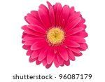 single gerbera blossom on a... | Shutterstock . vector #96087179