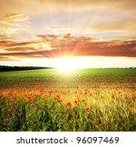 poppy | Shutterstock . vector #96097469