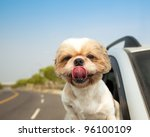 Stock photo dog in the car 96100109