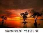 Mangrove Trees And Landscape...