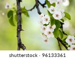 Fruit Tree Blossom Close Up....