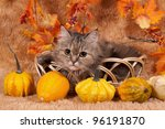 Portrait of a nice cat in a basket on a brown background - stock photo