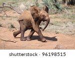 Stock photo baby elephant 96198515
