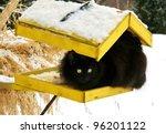 Black Cat On A Yellow Bird's...