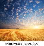 Meadow Of Wheat. Nature...