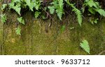 Wild ferns hanging over a bed of moss - stock photo