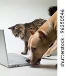 Stock photo cat and dog next to a laptop on a white background 96350546