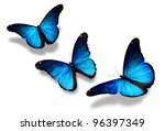 Three Blue Butterflies Flying ...