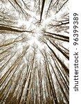 look up into the treetops  ... | Shutterstock . vector #96399389