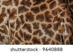 Pattern Of A Giraffe