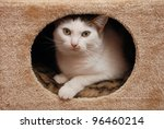 Stock photo lovely cat lying in the cat house 96460214