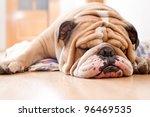 Stock photo english bulldog portrait 96469535