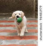 Stock photo labrador puppy running with a green ball 96481979