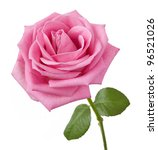 Stock photo beautiful pink rose with leaves isolated on white 96521026