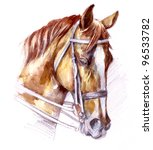 Illustration Of A Horse Breed...