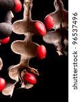 Lucky Bean Seeds  Erythrina...