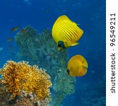 underwater scenery abstract coral garden and yellow butterfly fish - stock photo