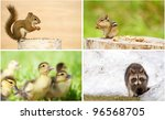 young wild animals collage. | Shutterstock . vector #96568705