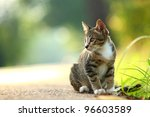 Stock photo little kitten playing on the grass roadside in morning 96603589