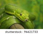 green tree python | Shutterstock . vector #96621733