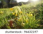 Beautiful wild daisies growing in grass. - stock photo