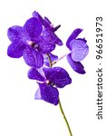 Violet Orchids On White...