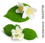 Beautiful Flowers Of Jasmine ...
