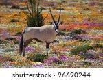 oryx between flowers ... | Shutterstock . vector #96690244